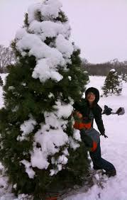 cut down your christmas tree in south lake tahoe south lake tahoe