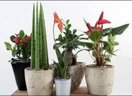 Design For Indoor Flowering Plants Ideas Indoor Plants Design Ideas Internetunblock Us Internetunblock Us
