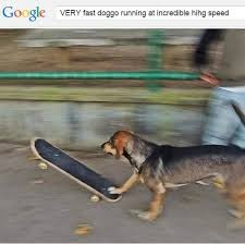 Fast Meme - very fast doggo running at incredible hihg speed know your meme
