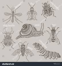 hand drawn beetles set insects design stock vector 405278098