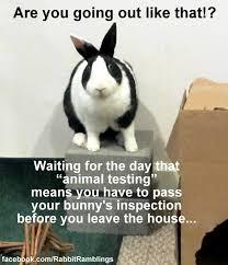 rabbit ramblings rr funny bunny memes