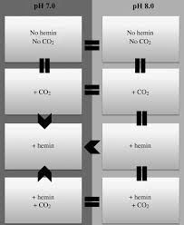 mycose b b si ge effects of hemin co2 and ph on the branching of candida albicans