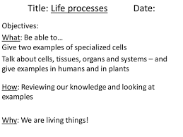 specialised cells powerpoint and worksheet by lauh88 teaching
