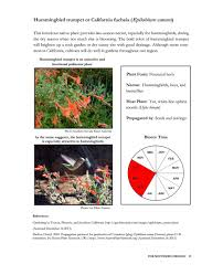 tucson native plants somonarchs org native pollinator plants