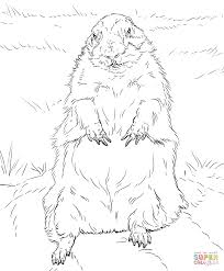 groundhog standing up coloring page free printable coloring pages