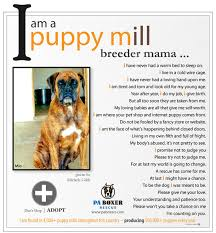 boxer dog sayings pa boxers inc is a non profit organization who is dedicated to