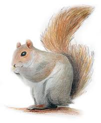 squirrel png free icons and png backgrounds