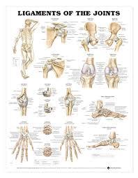 Anatomy Of Human Body Bones Anatomy Of The Body Bones Anatomy Human Body Skeleton Yoga Anatomy