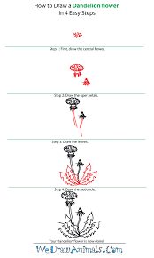 Dandelion Facts How To Draw A Dandelion Flower