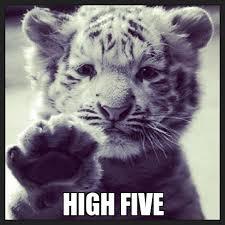 Tiger Meme - tiger cub high five weknowmemes generator