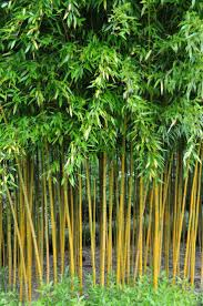 bamboo garden stakes perth home outdoor decoration