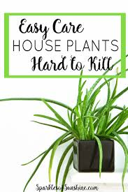 Easy Care Indoor Plants Easy Care House Plants That Are Hard To Kill Sparkles Of Sunshine