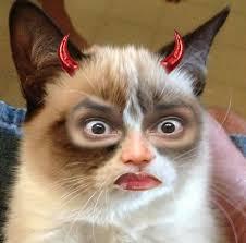 Cat Meme Ladies - meme images ladies and gentlemen me wallpaper and background