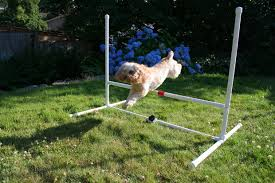 Backyard Agility Course Dog Agility Jump 8 Steps With Pictures