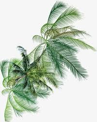 trees coconut trees green creative taobao trees coconut trees