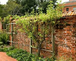 inspiring ways to add privacy to your yard bruzzese home