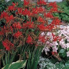 Zone Gardening - 455 best gardening zones 4a 4b 5a 5b 6a 6b images on pinterest