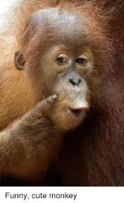 Funny Monkey Meme - funny cute monkey funny meme on me me