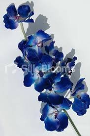 blue orchids artificial midnight blue orchids real touch blue