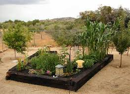 Gardening Pictures 25 Best Raised Vegetable Gardens Ideas On Pinterest Garden Beds
