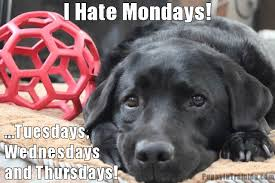 I Hate Mondays Meme - i hate mondays puppy in training