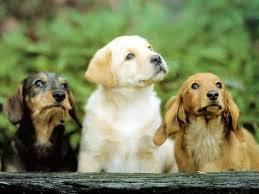Cute Dogs Wallpapers by Dog Free Hd Top Most Downloaded Wallpapers Page 10