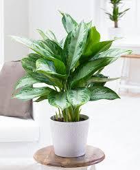 low light plants for bedroom 10 houseplants that don u0027t need sunlight plants gardens and indoor