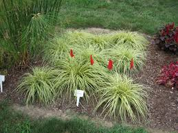 decorative grasses gardening in narrow spaces