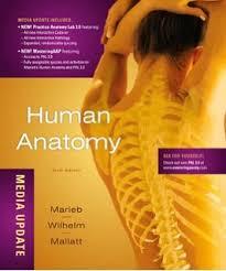 Human Anatomy And Physiology Marieb Hoehn Duoderum Pancreas Marieb Human Anatomy Soleus Biceps Triceps