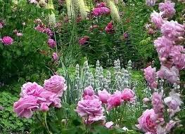 most beautiful flower gardens in canada butchart gardens garden