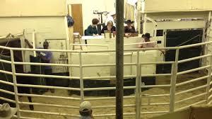 Texas Sale Barn Texas Cattle Auction Youtube
