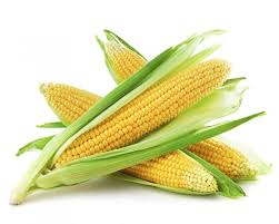 cuisiner des epis de mais comment bien cuire les épis de maïs