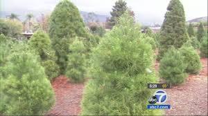 christmas tree farm ventura county christmas and accessories