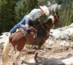 Horse Saddle by 10 Saddle Fit Tips To Enhance Your And Your Horse U0027s Comfort
