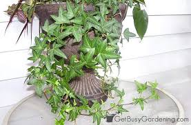 low light house plants 20 low light indoor plants that are easy to grow houseplants