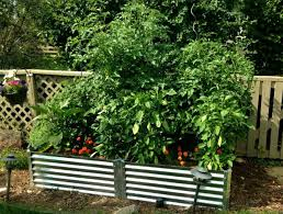 Corrugated Metal Garden Beds New Garden New Year Boxhill Design