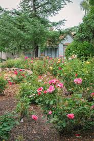 family garden territorial rose garden sharlot hall museum