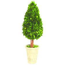Rosemary Topiary Topiaries The Home Depot