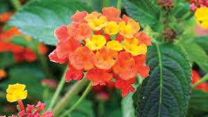 best flowers for bees u0026 butterflies sunset