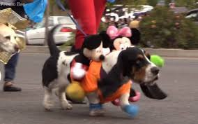 pooches and their partners parade through tower district the