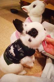34 best bunny images on pinterest animals bunny