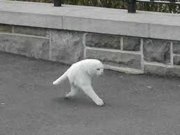 Google Maps Meme Revealed The U0027half Cat U0027 Not Created By Google Street View The