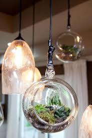 47 best terrarium plants images on pinterest terrarium plants