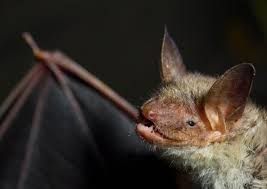 first rabid bat of season reported in wilmington cbs chicago
