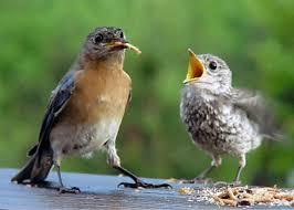 about backyard bird lover