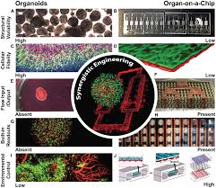 home cell stem cell