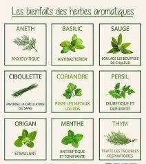 les herbes aromatiques en cuisine pas de cuisine sans herbes aromatiques cuisine du monde