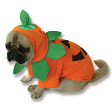 Dog Halloween Party Ideas Pumpkin Pooch Dog Costume Buycostumes Com