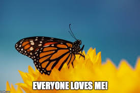 What Makes Me Me - what makes a butterfly s wings so colorful science abc
