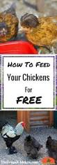 best 25 types of chickens ideas on pinterest frizzle chickens